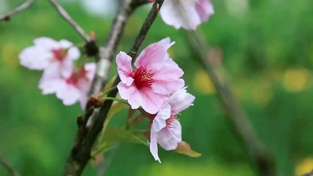 Bà Nà Hills: Thiên đường hoa trong mây