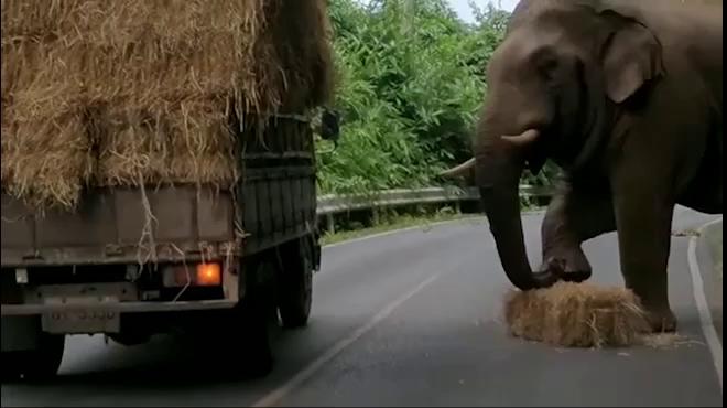 """Voi khổng lồ chặn xe tải, thản nhiên """"cướp đồ"""" - ảnh 1"""