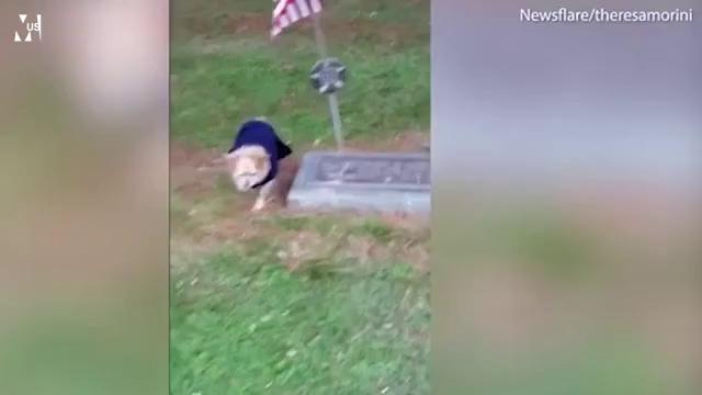 Cảm động chú chó trung thành muốn nằm lại bên mộ chủ