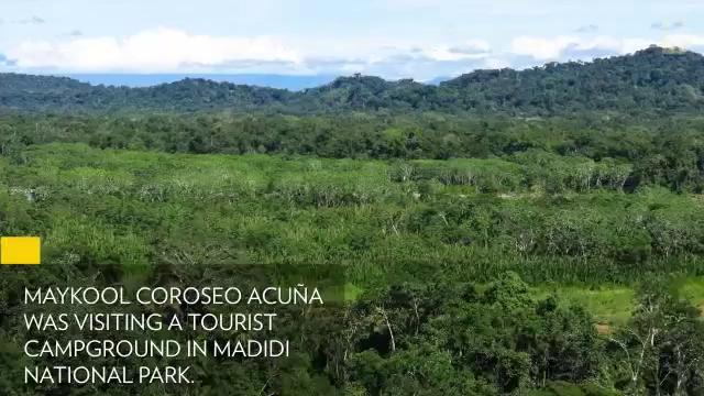Lạc trong rừng Amazon 9 ngày, du khách được đàn khỉ cứu sống