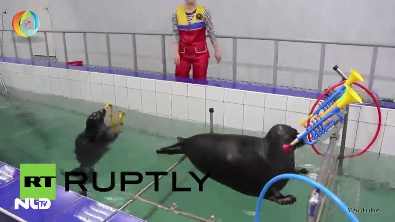 Video: Xem hai chú hải cẩu thổi kèn và vẽ tranh cực độc