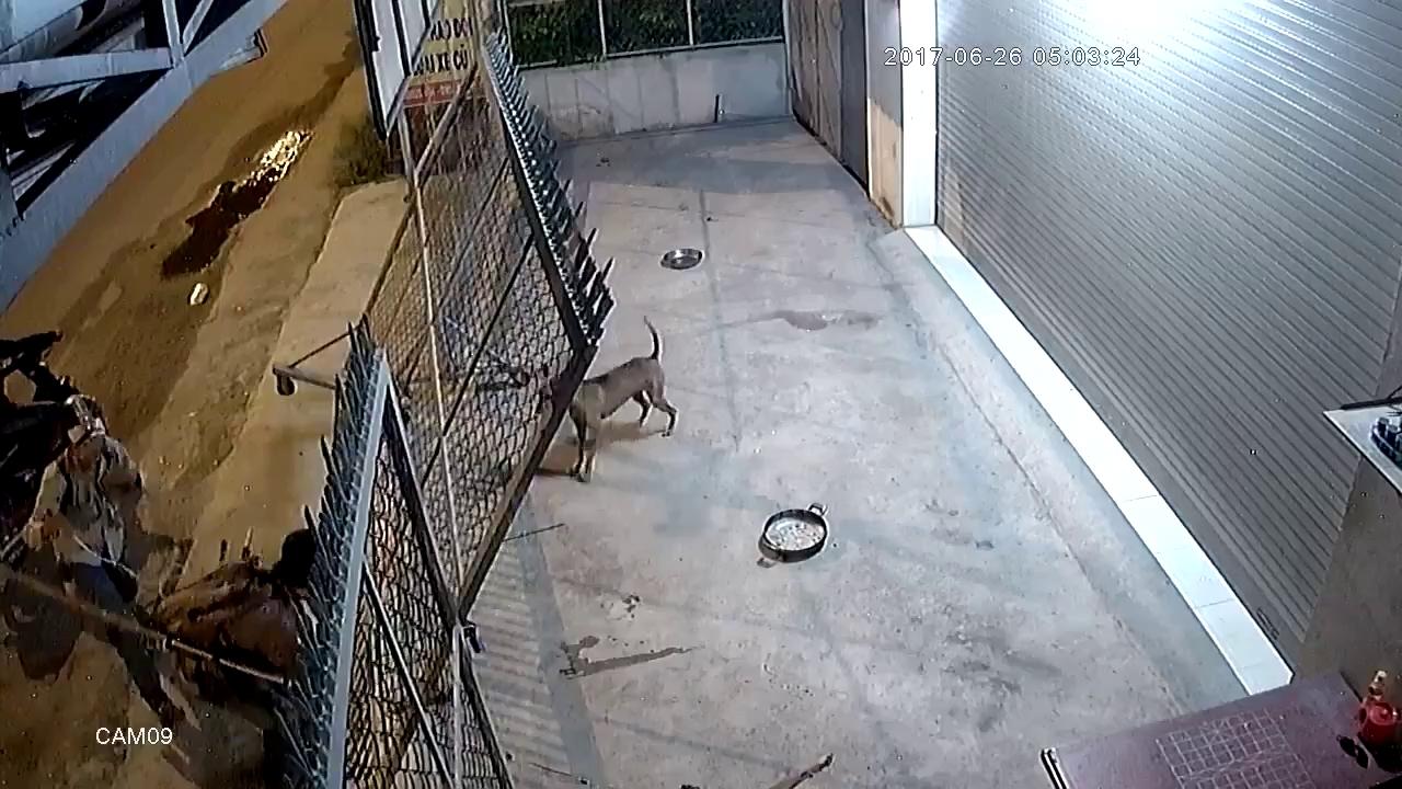 Trộm chó manh động, dùng vũ khí uy hiếp chủ nhà