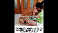 Loài chó có thể biết được cảm xúc của chủ nhân chỉ bằng…mũi!