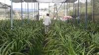 """Vườn lan tiền tỷ xanh mướt của """"lão nông"""" ở Lâm Đồng"""
