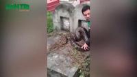 Hưng Yên: Giải cứu trăn gấm 40kg mắc kẹt trong mộ