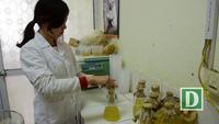 """Tận mắt loại nấm được ví như """"tiên dược"""" có giá 80 triệu đồng/ kg ở Hà Nội"""