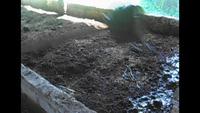 Trại nuôi trùn của anh Trúc