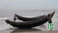Ngư dân vùng biển bãi ngang phấn khởi bội thu ruốc biển
