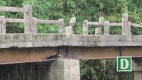 Hàng loạt cây cầu dân sinh xuống cấp tại Quảng Trị