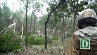 Bão số 12 làm tan nát gần 1.500 ha cao su của người dân tỉnh Phú Yên