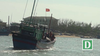 Ngư dân Phú Yên trúng đậm cá ngừ trong ngày tết