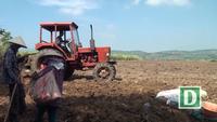 Phú Yên: Nông dân phá mía để trồng sắn