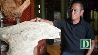Khối gỗ nu hóa thạch quý hiếm, nặng 140kg ở Nha Trang
