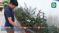 Mê mẫn vườn hồng tuyệt đẹp của ông chủ thầu xây dựng