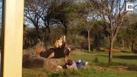 Choáng váng vì khoảnh khắc đà điểu tấn công một người đàn ông ở Brakpan