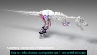 Những phát hiện bất ngờ về loài khủng long bạo chúa T. rex