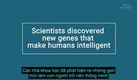 Những người thông minh thường có cùng 52 loại gen