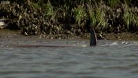 Chiêm ngưỡng khả năng săn mồi cực thông minh của cá heo mũi chai