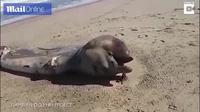 Xác quái vật khổng lồ bí ẩn trôi dạt vào bờ biển châu Phi