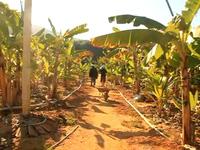 Bình Định: Tỷ phú nhà quê rời chốn phồn hoa vào rừng nuôi heo