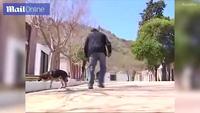 Những hình ảnh về chú chó Capitan bên người chủ lúc sinh thời