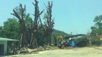 """3 cây """"quái thú"""" được trồng bất đắc dĩ bên vệ đường để cứu cây sống"""
