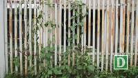 Kim tiêm ma tuý vứt đầy trong biệt thư bỏ không ở Hà Nội