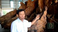 Ông Mai Kiên kể về quá trình mua gốc bàng đá