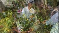 Clip cây quất được tạo dáng độc lá, hút khách mua