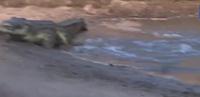 Những khoảnh khắc thoát chết may mắn của con mồi trước kẻ đi săn trong tự nhiên