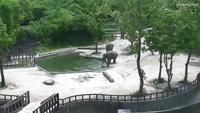 Thán phục màn hợp tác của cặp voi trưởng thành để cứu voi con rơi xuống nước