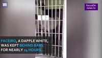 Ngựa bị tống vào nhà giam vì làm hư hỏng xe người khác