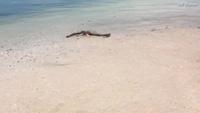 Xác sinh vật kỳ lạ giống quái vật hồ Loch Ness dạt vào bãi biển