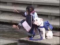 Hài hước màn vượt sông của chó và khỉ