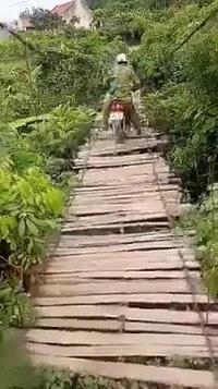 Người đàn ông liều mình chạy xe máy qua cây cầu gỗ ọp ẹp tưởng chừng như sắp sập