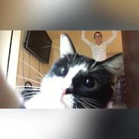 Chết cười với những khoảnh khắc hài hước của loài mèo