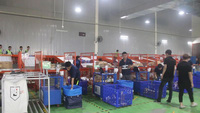 Hệ thống phân loại hàng hóa tự động tại Hà Nội có công suất lên tới 10.000 sản phẩm/giờ. (Video: Cẩm Vy)