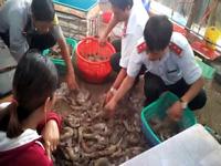 Bắt quả tang bơm tạp chất vào tôm tại huyện Đông Hải, tỉnh Bạc Liêu.