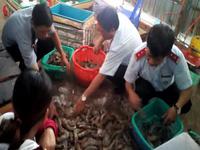 Một vụ bắt tôm chứa tạp chất vừa qua trên địa bàn huyện Đông Hải, tỉnh Bạc Liêu.