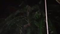 Mưa lớn, gió rít ở Nghệ An lúc 23h ngày 18/7