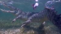 Du khách liều mình đùa giỡn cùng cá sấu dài 4m
