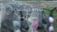 Lạ lùng hàng rào treo toàn áo ngực phụ nữ thành điểm du lịch hút khách