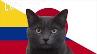"""""""Tiên tri mèo"""" chọn Colombia thắng Nhật Bản"""