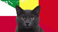 """""""Tiên tri mèo"""" chọn Ba Lan thắng Senegal"""