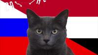 """""""Tiên tri mèo"""" chọn Ai Cập sẽ thắng Nga"""