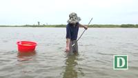 Độc đáo nghề cào lịch trên sông Trà Khúc