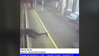 Thót tim cảnh giải cứu hành khách mắc kẹt dưới đường tàu