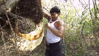 Người đàn ông để hàng ngàn con ong đốt mà không đau