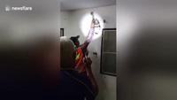 Chủ nhà tá hỏa khi phát hiện con trăn khổng lồ