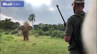 Người dùng tay không chặn voi hung dữ